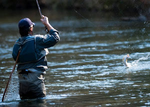 Когда и где лучше рыбачить в Гродно?