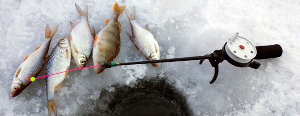 Какую рыбу можно поймать в Гродно?