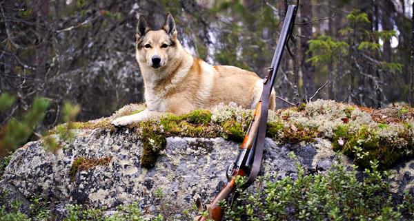 Где лучше всего охотиться? Самые удачные места для охоты.
