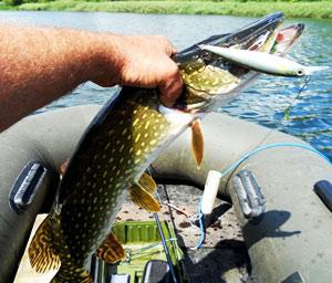 Рыбалка на браславских озерах отзывы